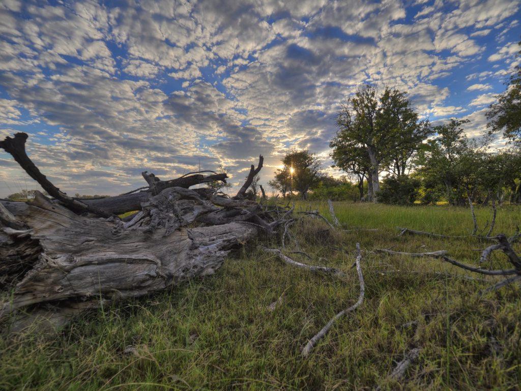 Ein morscher Baumstamm im Sonnenaufgang in Botswana steht für die Kategorie Landschaft